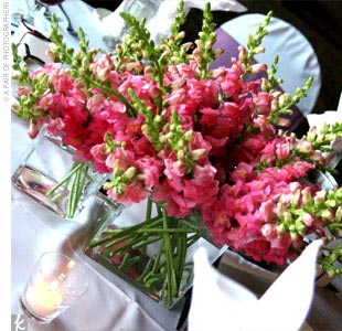 Tricia and Chads pink color theme gave them an abundance of flower choices. Instead of limiting myself to a few types, I decided to have different flowers on every table, Tricia explains.