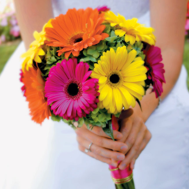 Brittany carried a collection of magenta, yellow, and persimmon-colored gerbera daisies with green hydrangea filler, wrapped with magenta ribbon and vibrant green wire.
