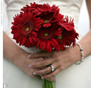 Erin's bouquet burst with dark red gerbera daisies. The stunning arrangement was tied with an ivory ribbon.