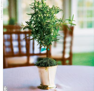 Miniature lavender topiaries in mint julep cups topped some of the tables, while guest tables featured angel vine topiaries in large mint julep cups.