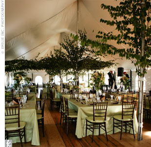 How to do a diy woodsyenchanted forest themed wedding in a tent wedding to get ideas image junglespirit Images