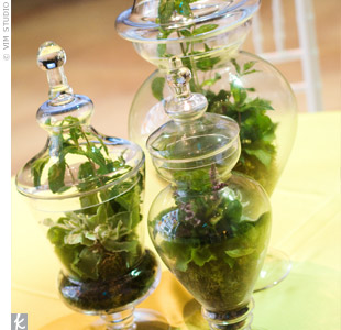 It doesn't get much greener than this! Live terrarium centerpieces served as focal points on the tables.