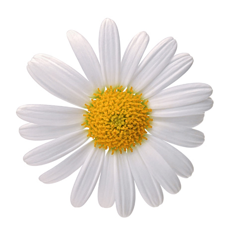 Daisy