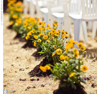 Tara and Mitch had potting soil added to the yellow bougainvilleas that lined the aisle to create a just-planted look.