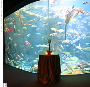 Guests felt as though they were dining under the sea at The California Academy of Sciences. Brightly-colored fish and sea life danced in the blue water of the aquarium.