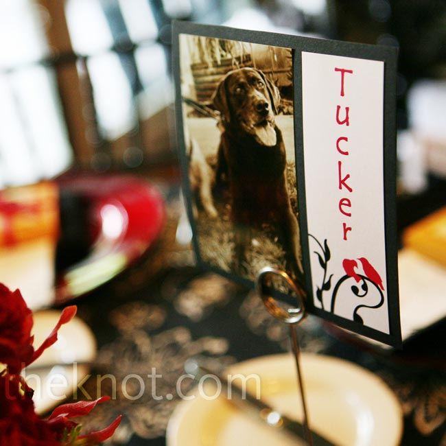 Guests were seated at tables named after Alison and Peter's childhood and current pets (they're both animal lovers and have three dogs and two cats between them). Each table sign also included a picture of the pet.