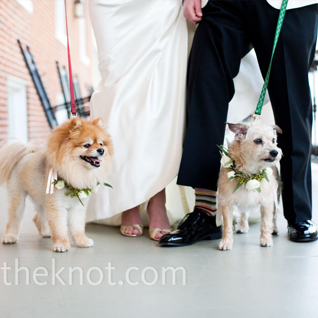 For the wedding, Lindsay and Michael's dogs wore wreaths accented with ribbon around their necks.