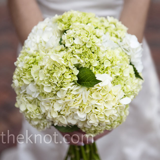 Sarah loves fresh hydrangeas, so naturally she asked her florist to use lots of them. Her bouquet was a round mix of green and white hydrangeas wrapped with ribbon.