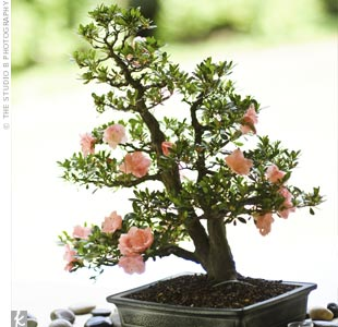 Martha incorporated her fathers passion for Bonsai trees into the centerpieces. She displayed his collection on the reception tables covered in burlap and surrounded them with river rocks and votives.