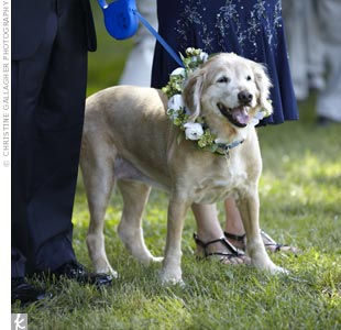 "Jill's golden retriever Sandy wore a collar of fresh flowers and served as the bride's ""dog of honor."""