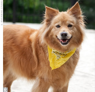 Nina's family dog, Heidi, wore a yellow bandana that matched the wedding colors.