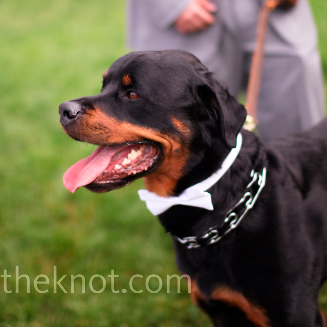The couple's Rottweiler sported a white bow tie and joined the groom's nephew and the bride's cousin as ring bearers.