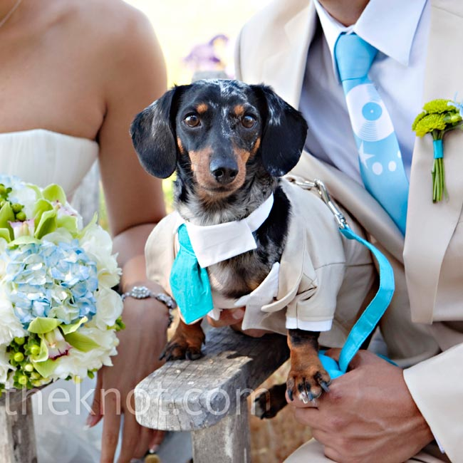 The couple's dachshund, Scratch, was their ring bearer. When Lou couldn't find dog-size khaki suits anywhere, she commissioned someone on Etsy to craft one.