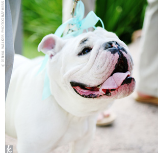 One of the ring bearers, the couple's bulldog, Duke, had a brown and blue polka-dot collar and leash tied with blue ribbons to hold the rings.