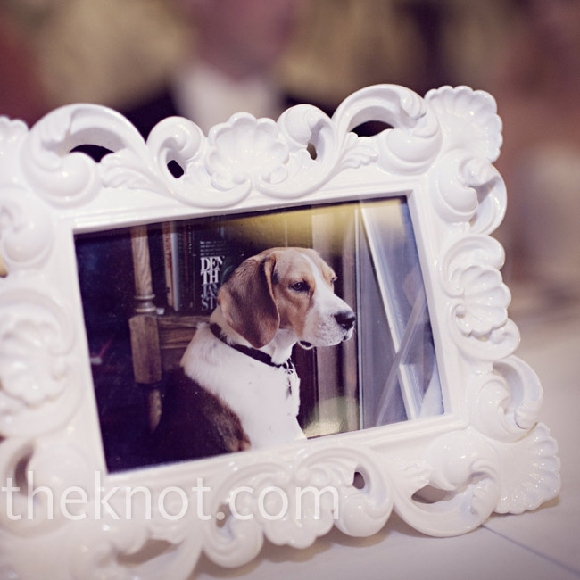 The couple's pup couldn't attend the wedding, so Jill's dad started his toast by giving them a picture of the little guy.