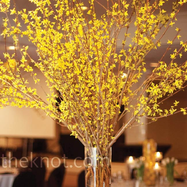 Delicate yellow forsythia can be a showstopper when displayed en masse and it added a natural mod look to the room.