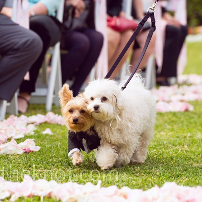 A bridesmaid escorted Katherine and Terence's dogs down the aisle.
