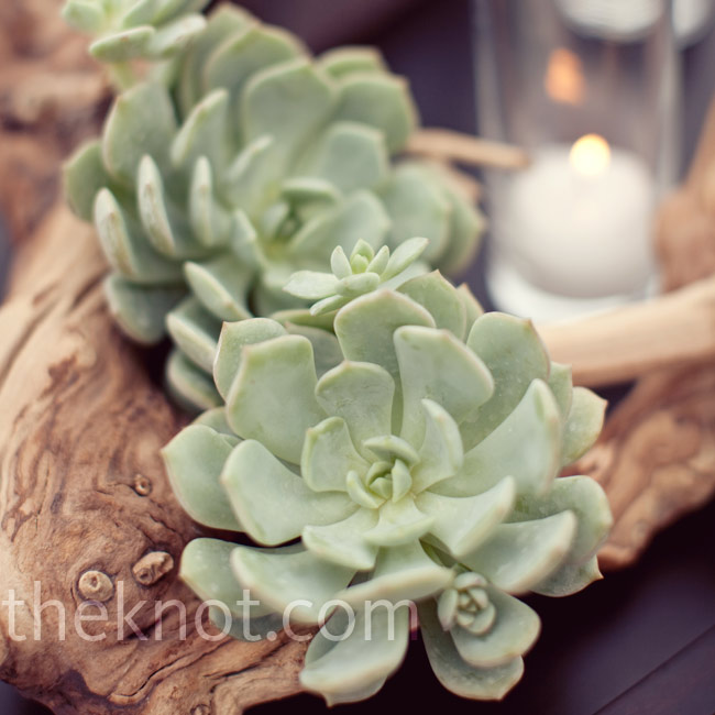 Reception tables were topped with grape-wood branches covered in moss and succulents, and surrounded by candles.