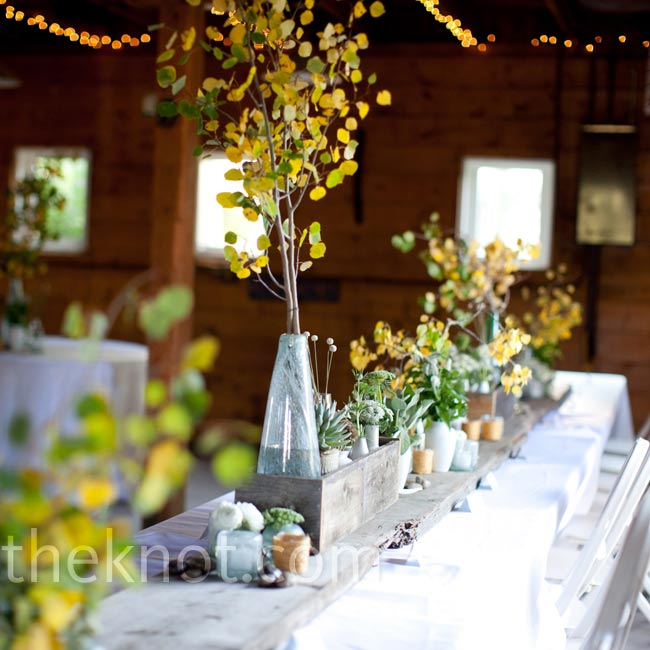 Reception tables were topped with mini aspen trees, which were retrieved from the mountains by Rachelle's parents just three days before.
