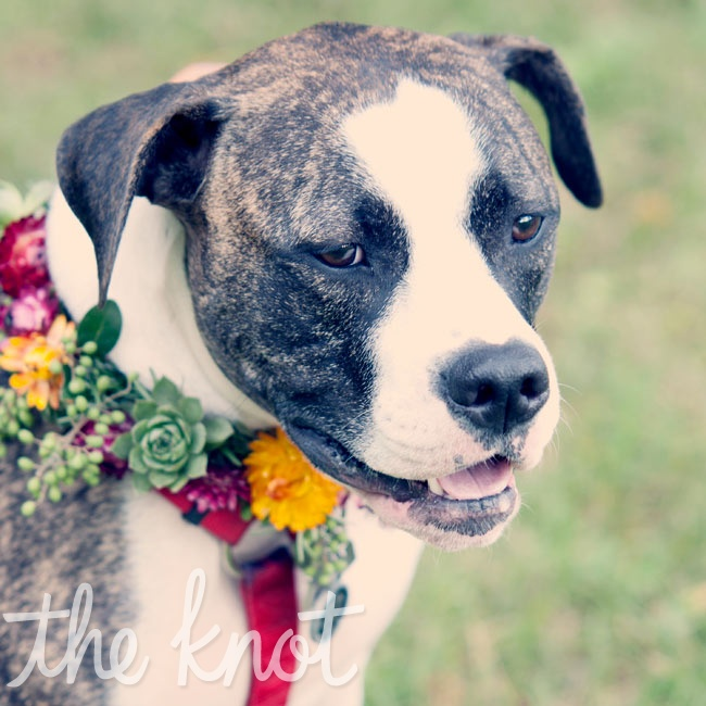 There was no question who would be the flower girl: Abita, the couple's American bulldog.