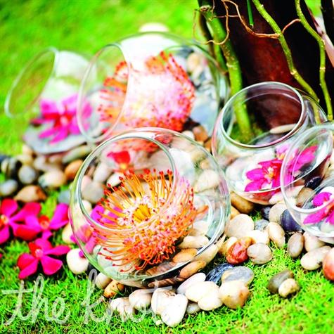 Orange Protea Flowers in Glass Bulbs
