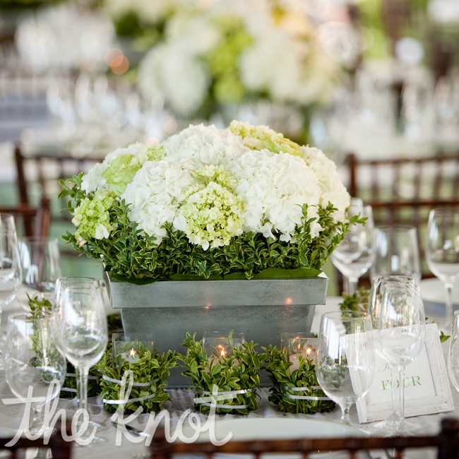 White and Green Hydrangeas nestled in boxwood in a galvanized titanium square holder created one of the centerpieces for the guest's tables. Each was surrounded by twelve votive candles wrapped in boxwood with wire.