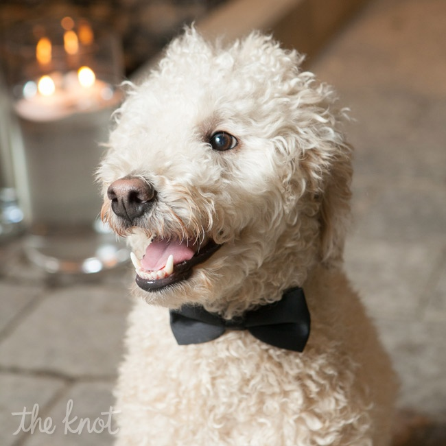 Chester, the couple's mini goldendoodle, was their ring bearer and wore a black bow tie down the aisle.