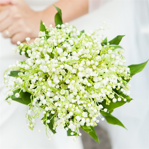 Baby's Breath Bridal Bouquet