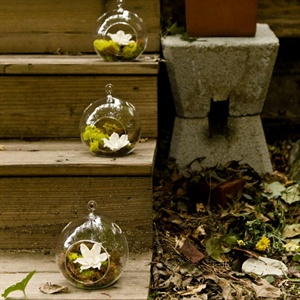 The couple decorated their backyard patio with glass globes filled with brown and green reindeer moss and a flower made of tapioca wood.