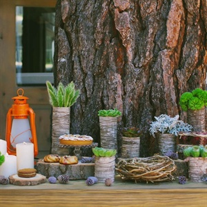 Even the dessert display was decorated with organic items. Succulents, bird nests, pinecones and pieces of wood blended perfectly with the day's décor.