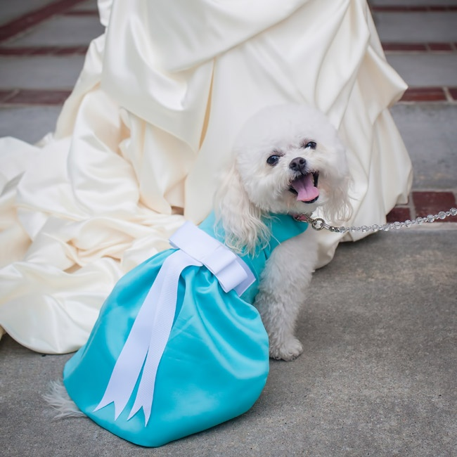 The couple's dog, Bella, served as the ring bearer for the ceremony.