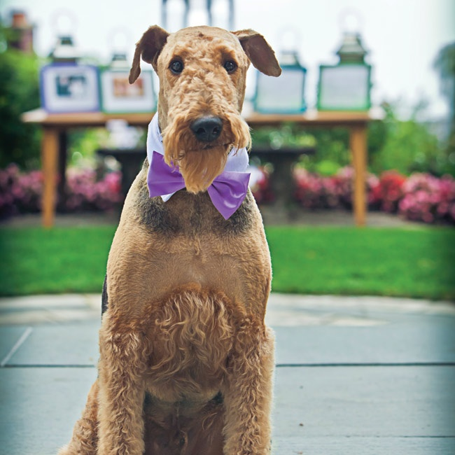 Savana's family dog, Sancho, walked down the aisle during the ceremony in a purple bow tie.