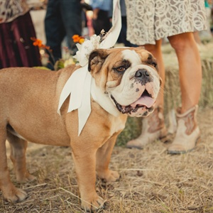 Dog in the Bridal Party