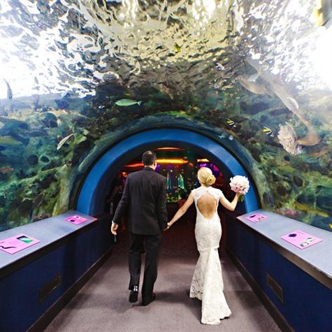 Newport Aquarium Wedding