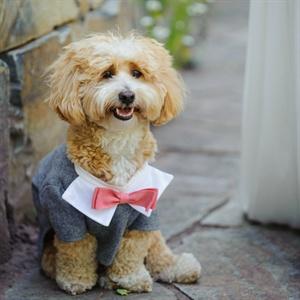 Custom Dog Tuxedo