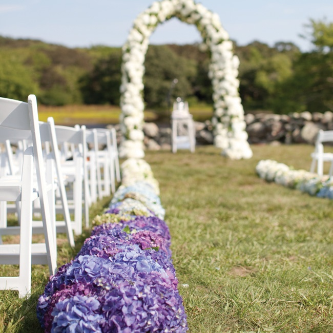 """Hedges"" of hydrangeas
