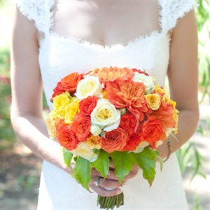 Patience garden roses,