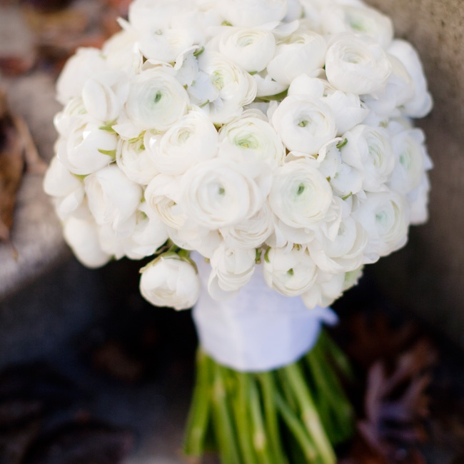Brooke's white ranunculus