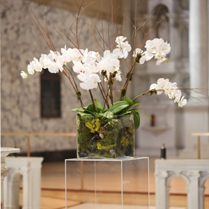 Phalaenopsis Orchid Decor