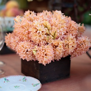 Peach Hyacinth Centerpiece