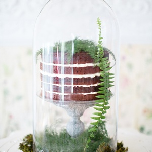 For a play on the Victorian fern-collecting craze, display a no-frills cake in a specimen container. The combination of the exposed layers of the cake (which were meant to look like dirt!) and an earthy bed of moss really amps up the rustic feel.