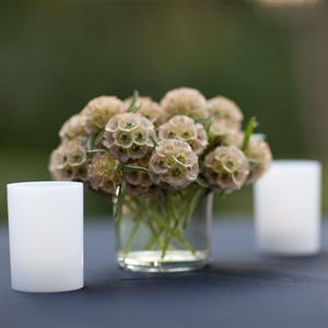 Scabiosa Pod Cocktail Hour Centerpieces