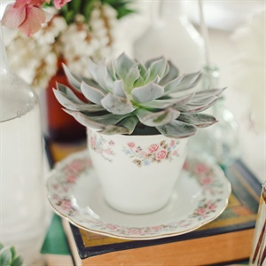 Vintage Teacup and Succulent Decor