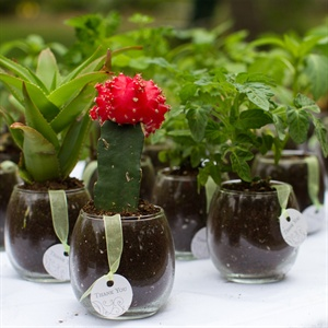 Green Wedding Favor Plants