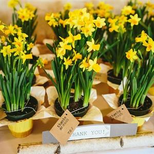 Daffodil Flower Favors