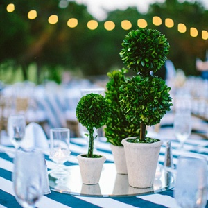 Mini Topiary Centerpieces