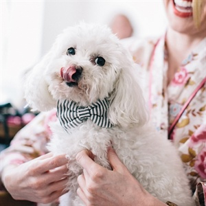 Pet Wedding Ideas