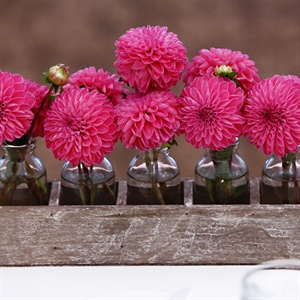 Hot Pink Dahlias in Glass Bottles