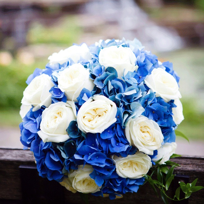 Deep blue hydrangeas, white roses and green ruscus leaves filled the classic round bouquet.