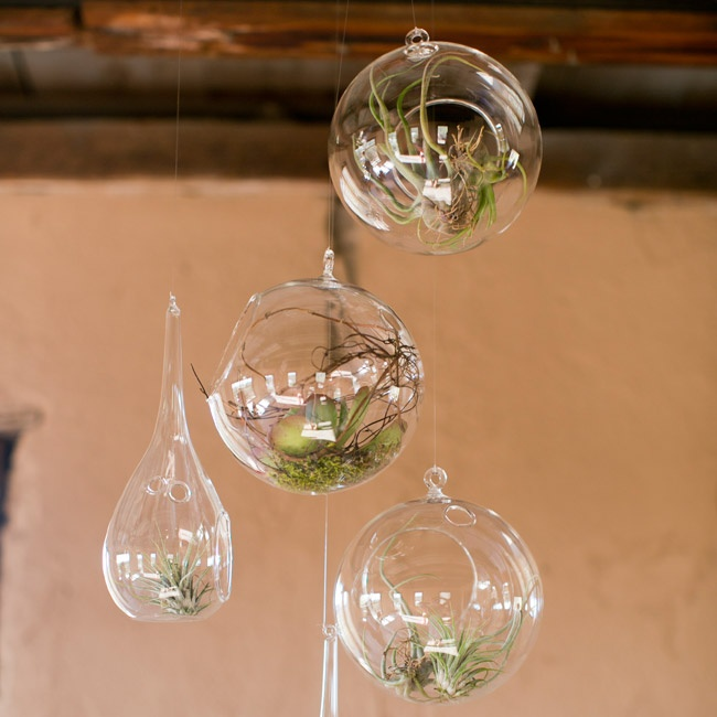 Air plants in varying glass vessels were hung from the rafters at the Tanque Verde Ranch homestead (nearby the ceremony and cocktail hour area).